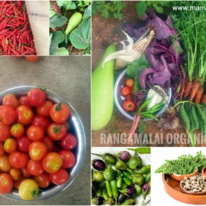 Native Vegetable Seeds Garden Kit