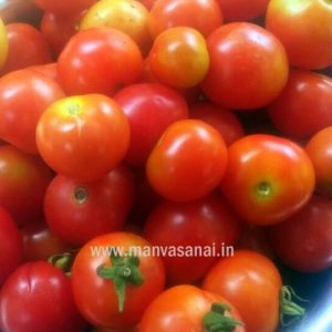 Cherry Tomato Ribbed