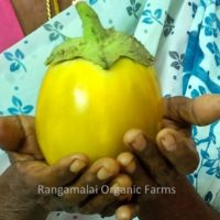 Thorn Brinjal – Balloon (Big) Seeds