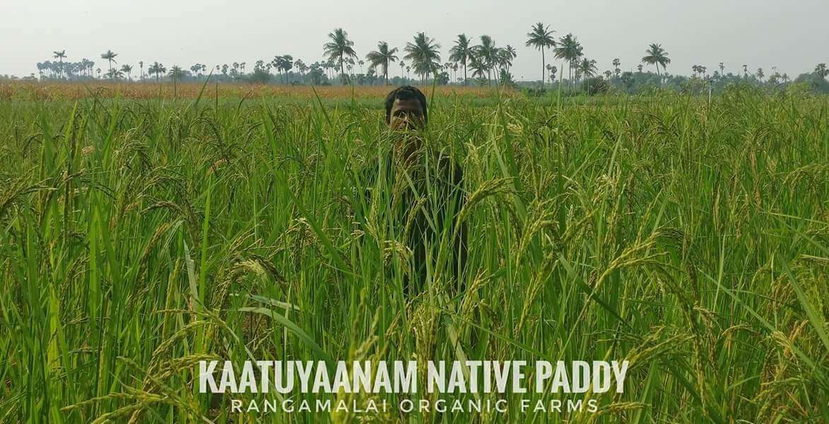 Explore our Traditional Paddy Varieties
