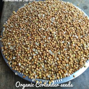 Organically grown Coriander / Dhania Seeds (Native variety), 250g